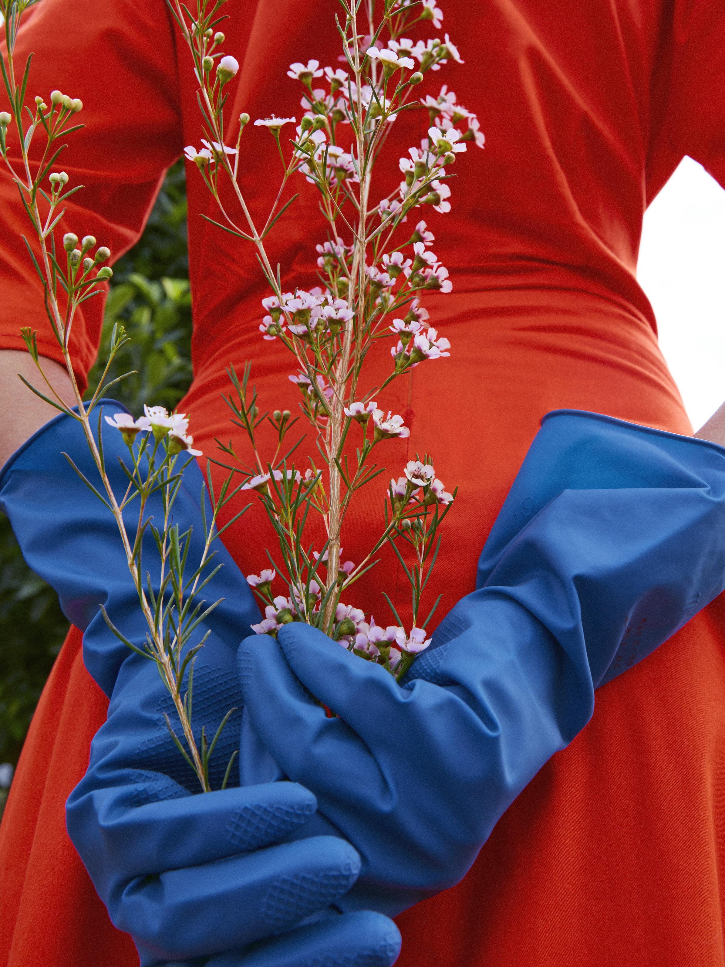 bloom_0385.jpg