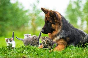Pet Care -