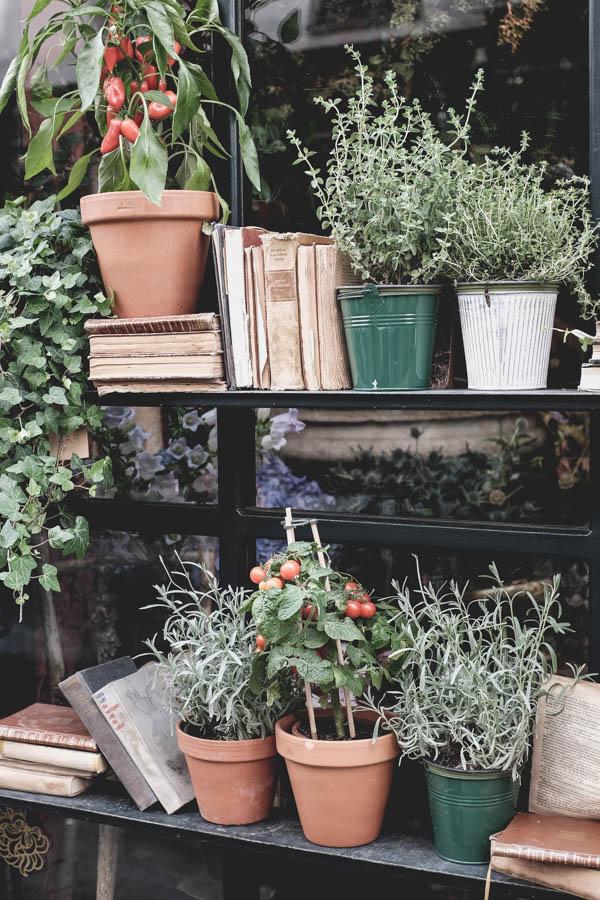 Gėlių krautuvėlė.    Flower shop stand.