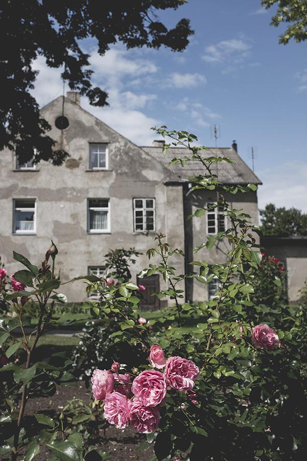 Rožės Rusnėje.  Roses in Rusne.