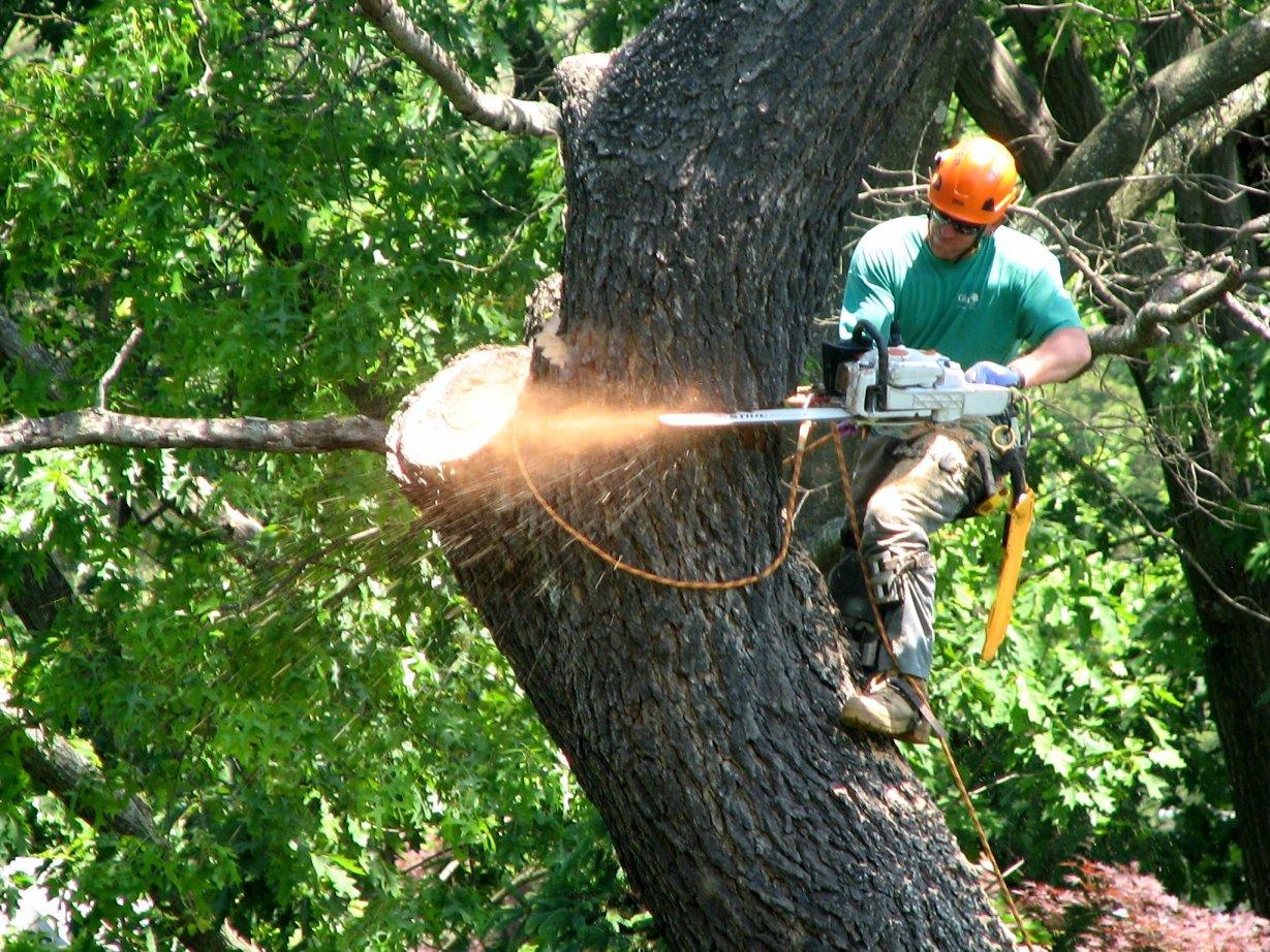 tree-removal-dan-rombold.jpg