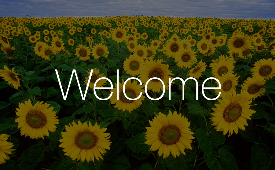 SunflowersWeb.jpg