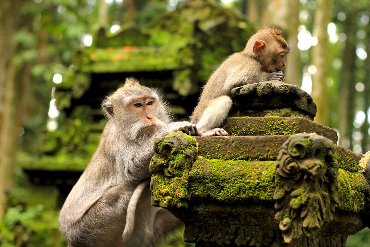 Sangeh-Monkey-Forest.jpg