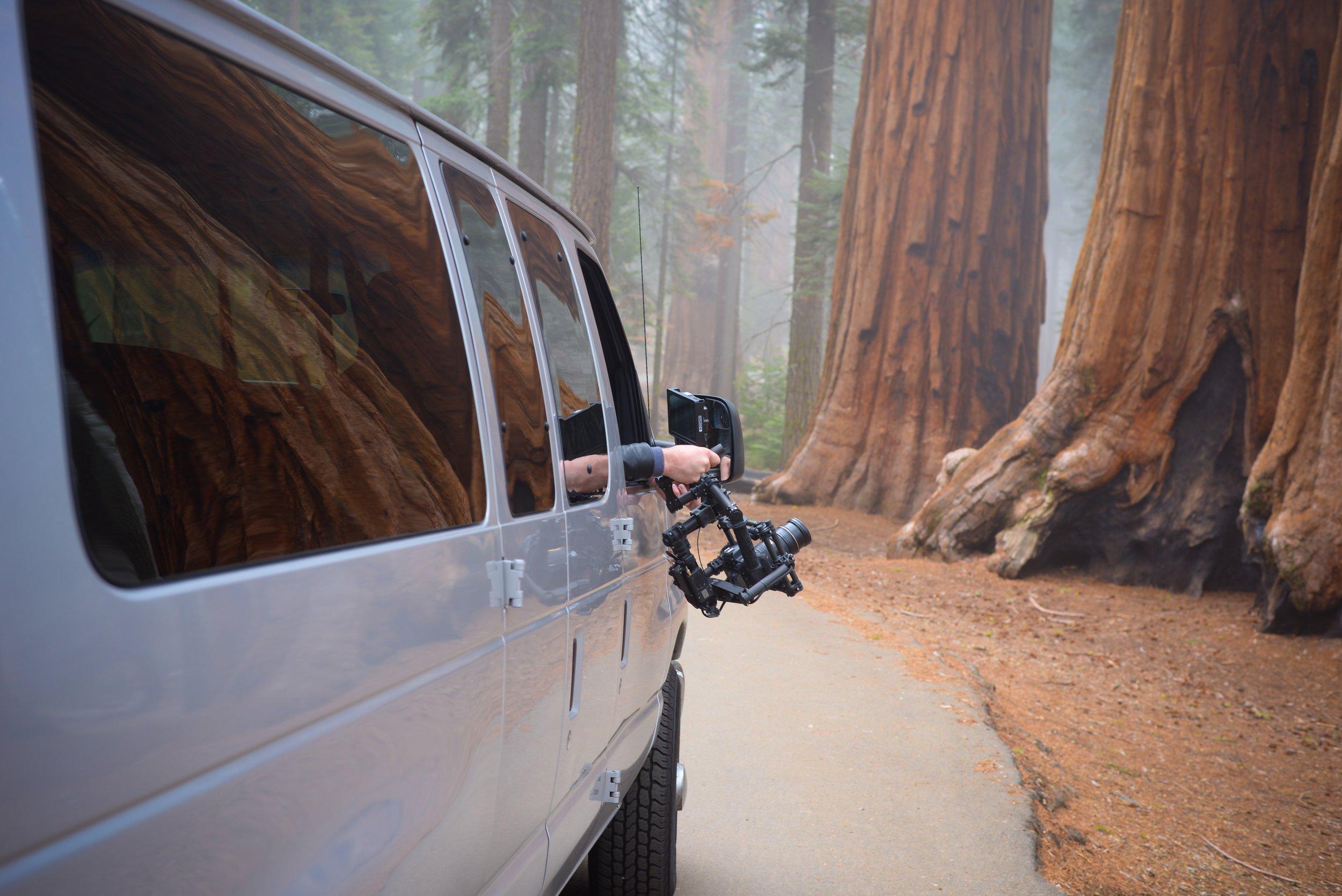 Movi in the Sequoias - April 2016 - California.JPG