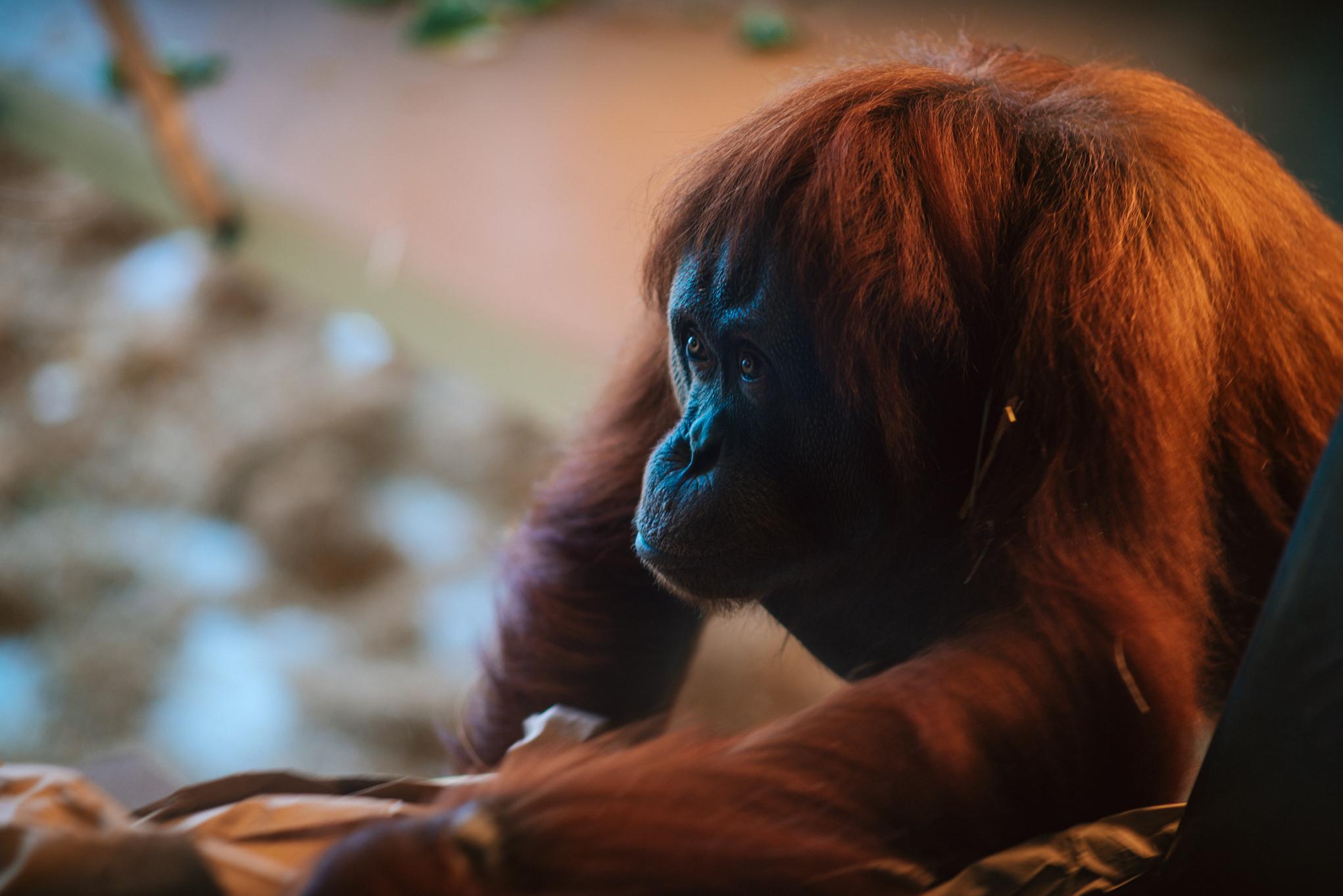 Zoo Trip - Cam's Favs - WEB-12.JPG