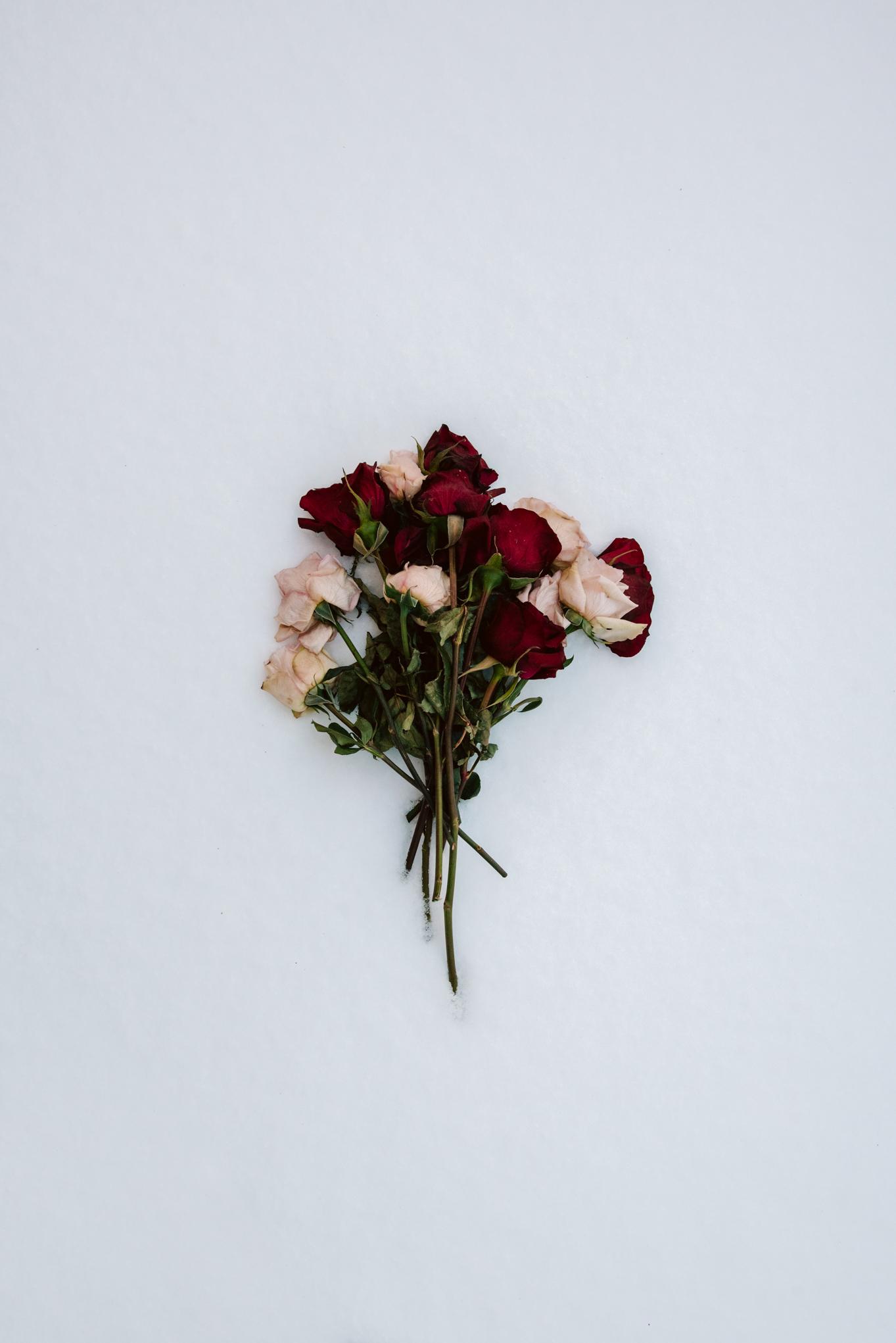 Roses in the Snow-1.jpg