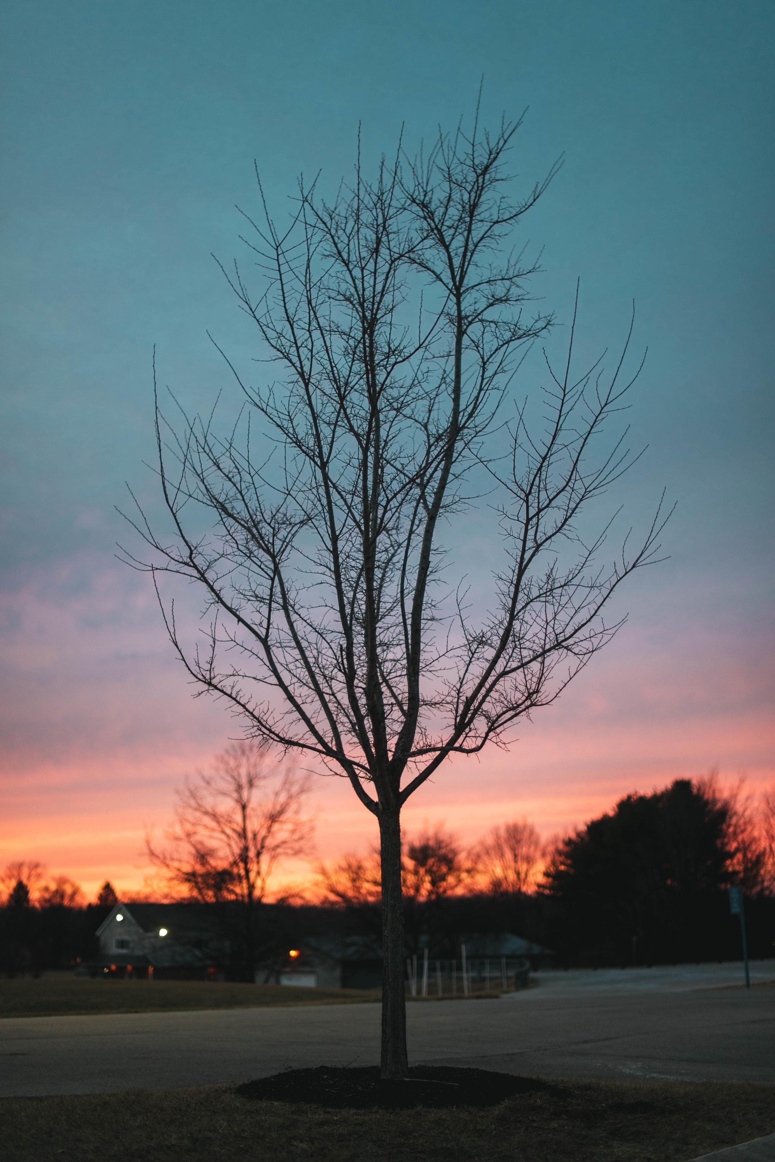 Sharper Sunset Tree - High Res-1.jpg