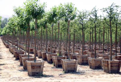 start-a-tree-farm.jpg