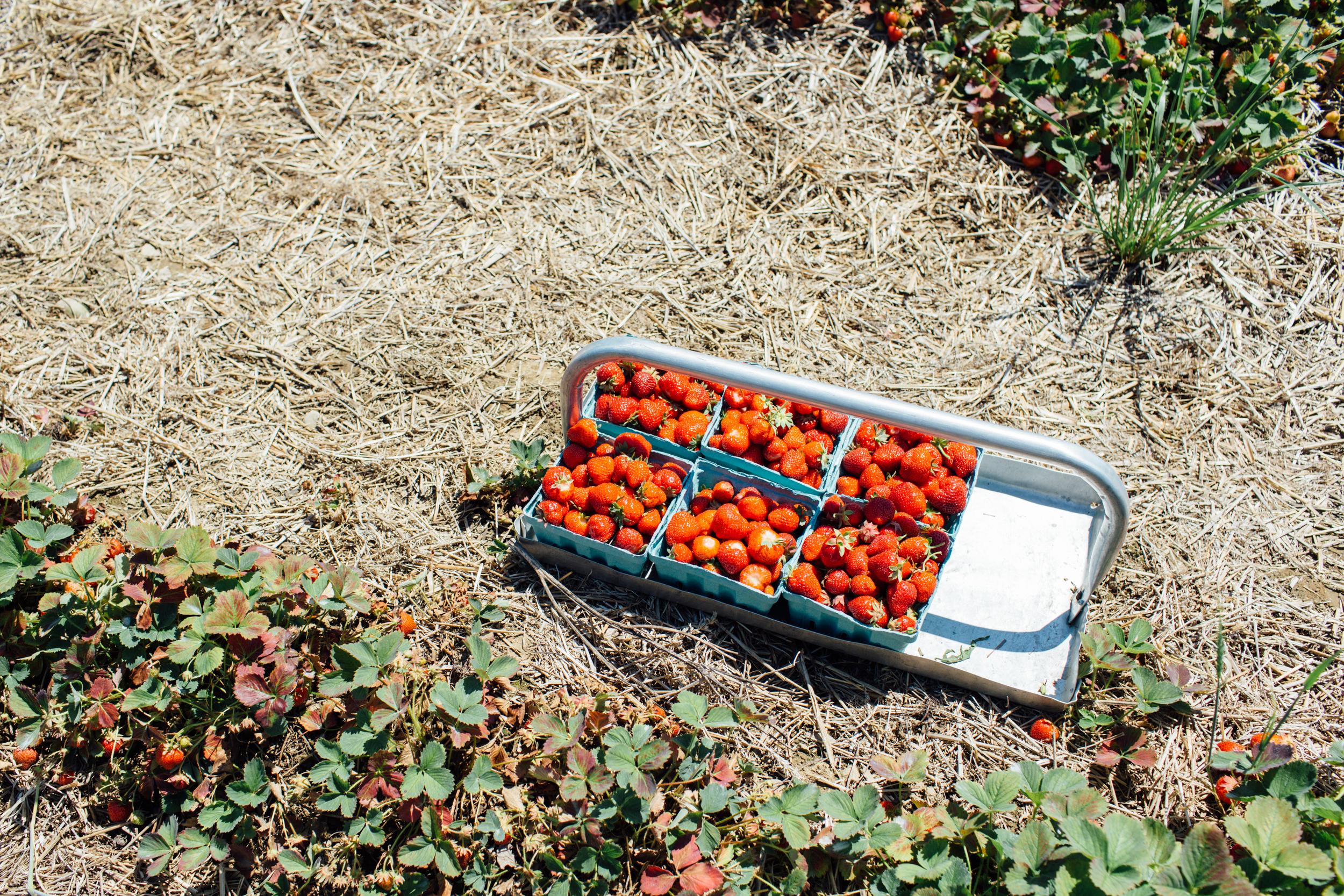 Dressel-Farm-NY-1.jpg