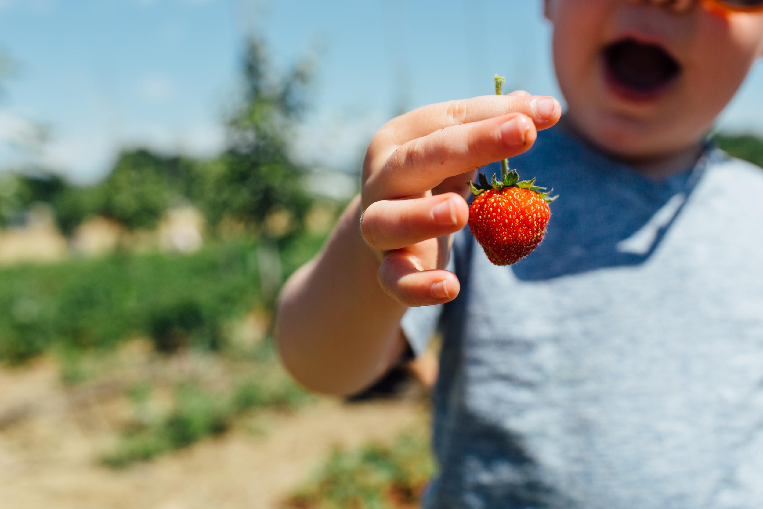 Strawberry-NY.jpg