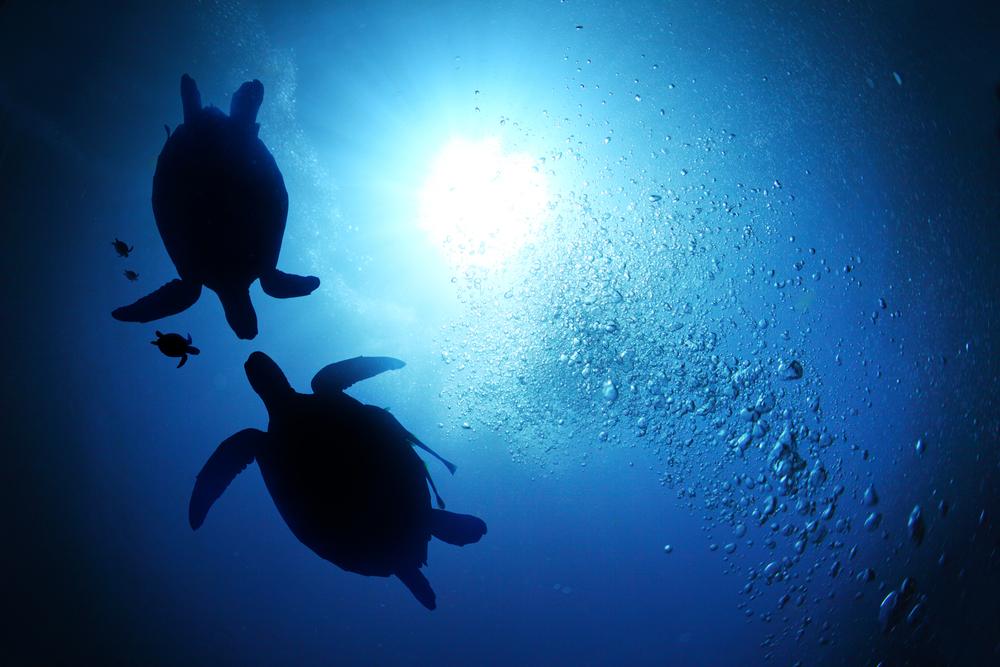 Two Turtle Ocean