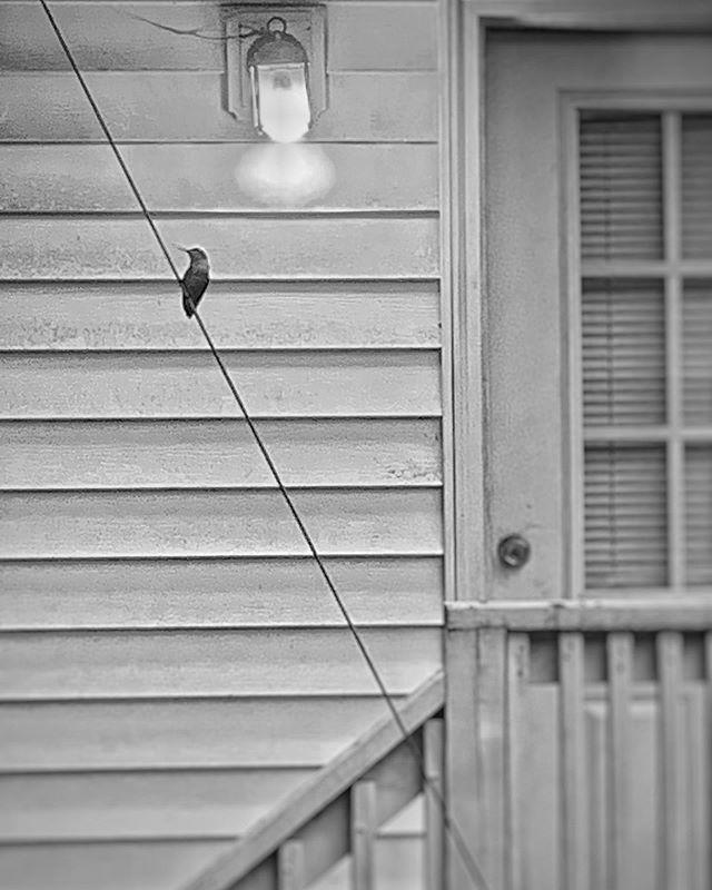 Tiny bird. Big storm. #hummingbird #storm