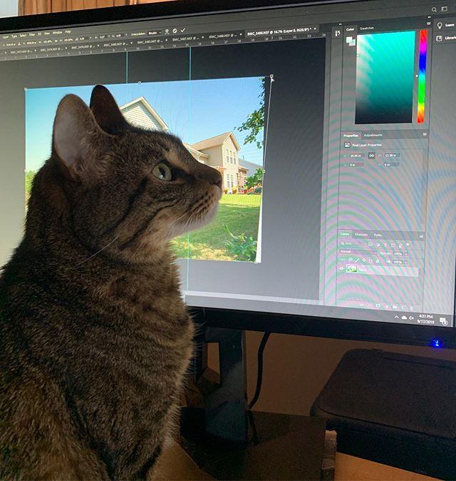 Everyone needs a good photog asst. #photography #editing