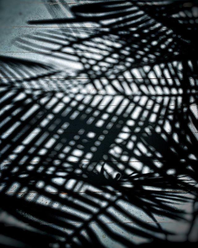 #mood  #durham #nature #blackandwhite