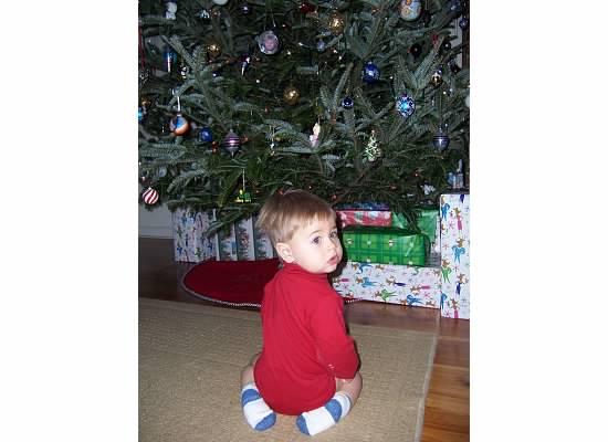 E christmas tree 2005.jpeg