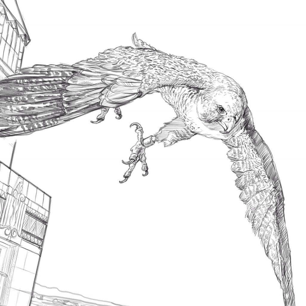 Pencil sketch of the male falcon.