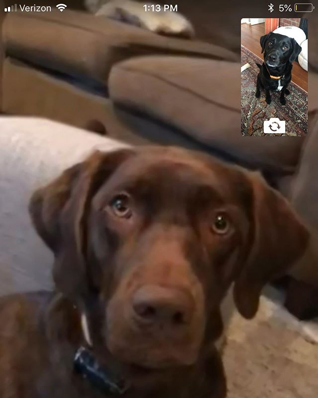 Happy National Dogs Day to our baby, Frankincense who loves to FaceTime with her cousins.