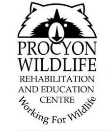Procyon-logo Cropped.jpg