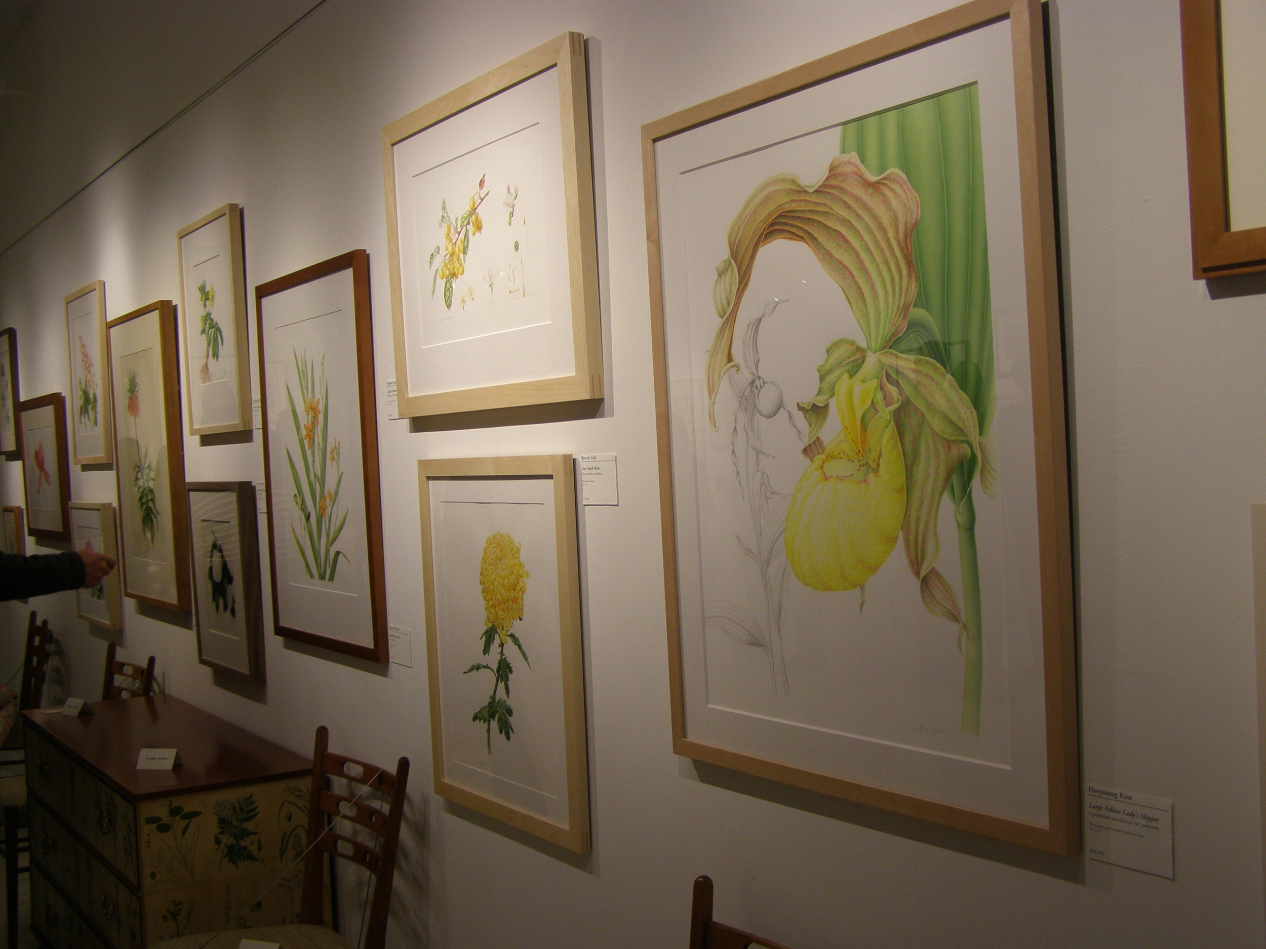 Best in the Show Award- HSNY/ASBA - Horticultural Society of New York and the American society of botanical artists host one of the finest botanical art exhibits. Heeyoung has been in the show in 2008, 2010, 2011, 2012, 2013, 2016. She won several awards including Best in the Show, 2012.photo: Display from the exhibit, 2016. The first from the right is Yellow Slipper Orchid by Heeyoung Kim.