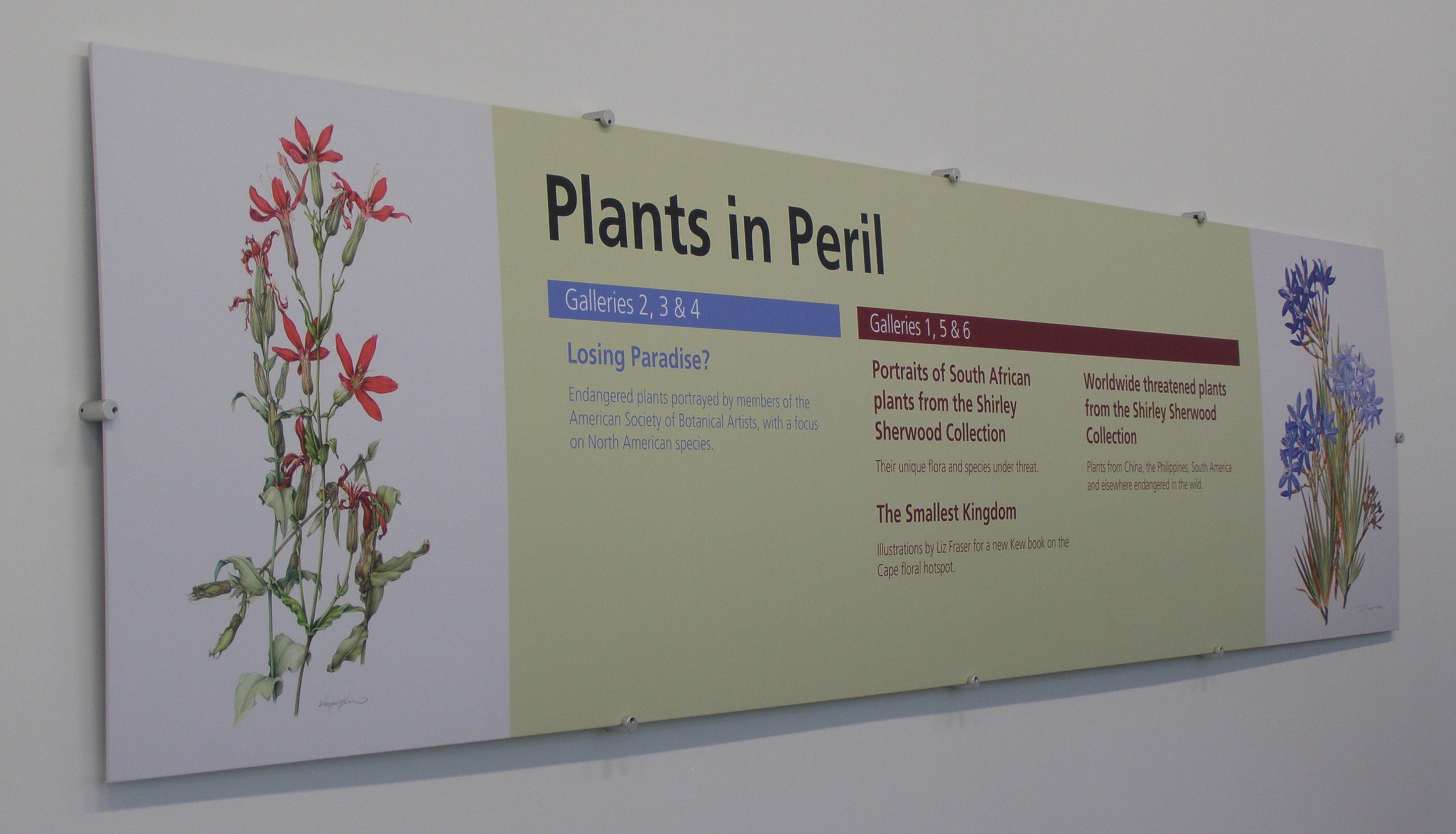 Royal Catchfly in KEW, London - This endangered prairie plant got some heat with 'Losing Paradise
