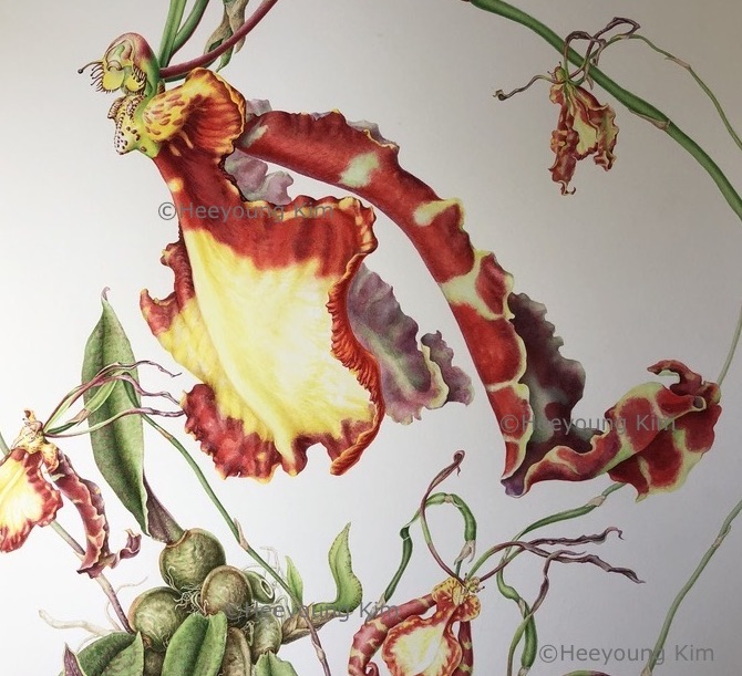 butterfly orchid poster copy.jpg