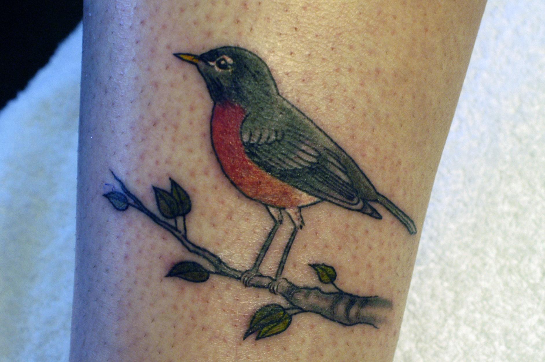 bird3.jpg