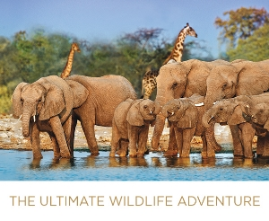 Africa Safari with AM Waterways from EnjoyVacationing.com. Check out these deals!