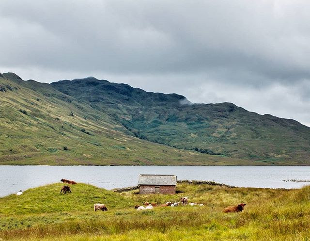 The misty shores of remote and wild Loch Arklet