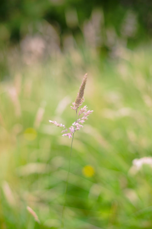 gardenblog-2.jpg