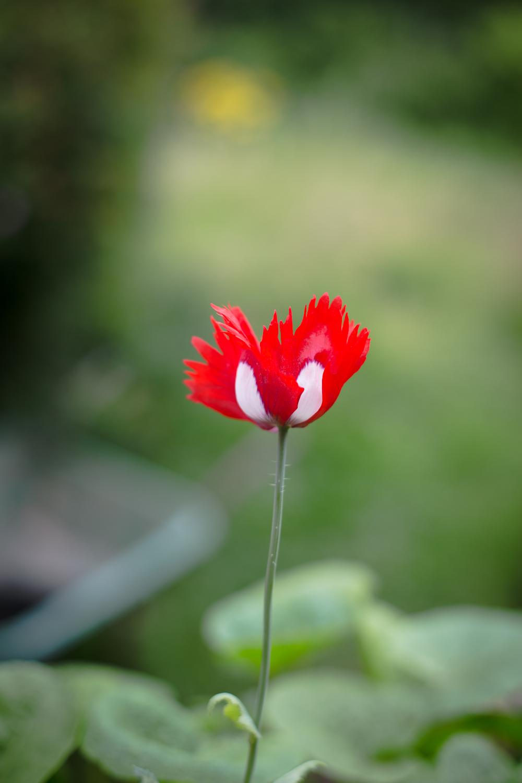 gardenblog-15.jpg