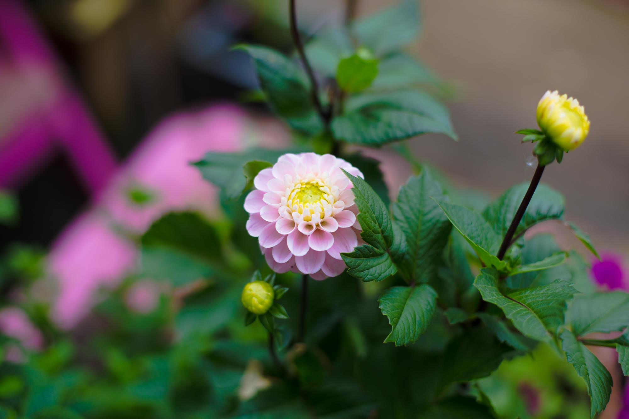 gardenblog-1.jpg