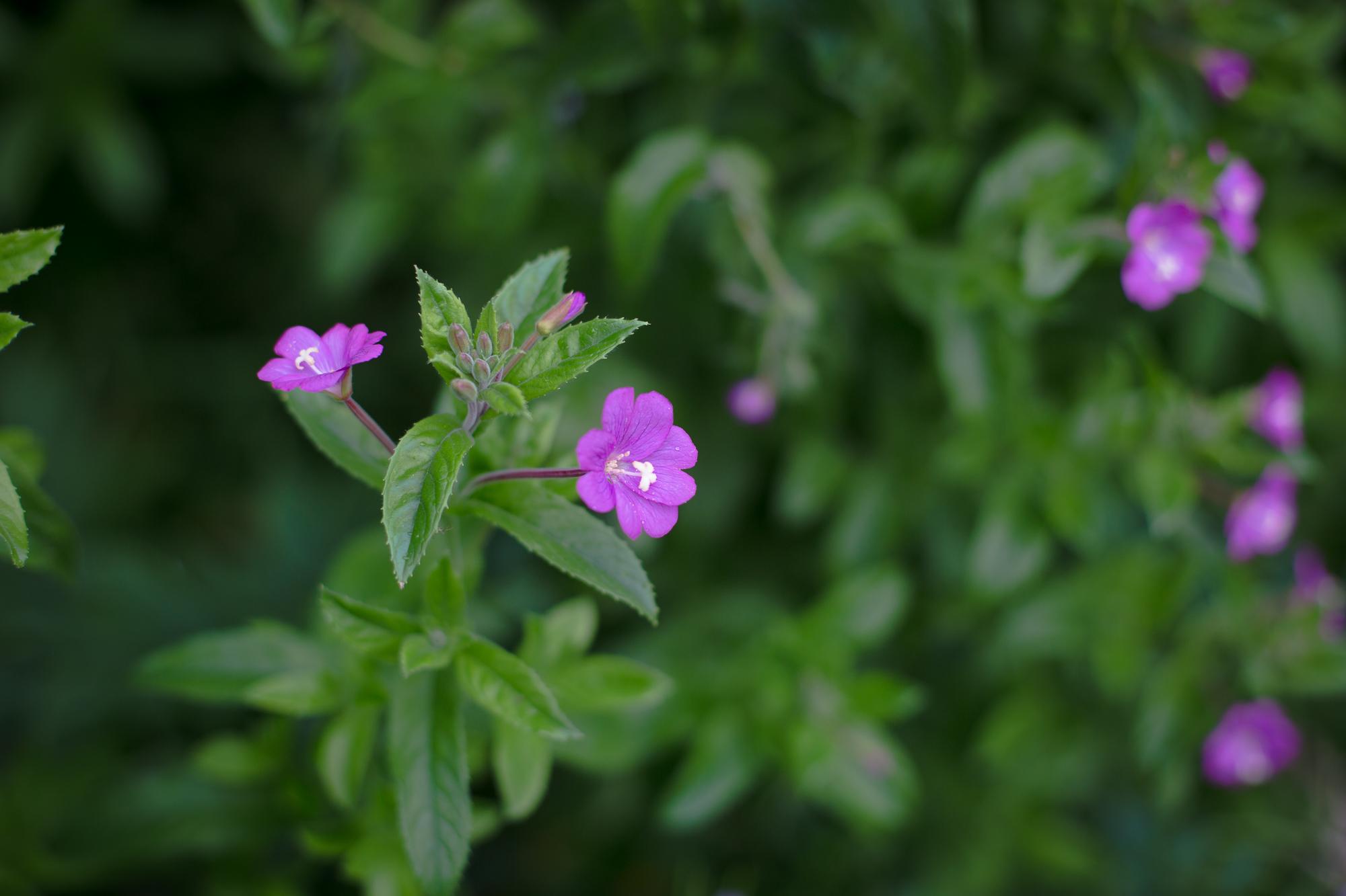 gardenblog-9.jpg