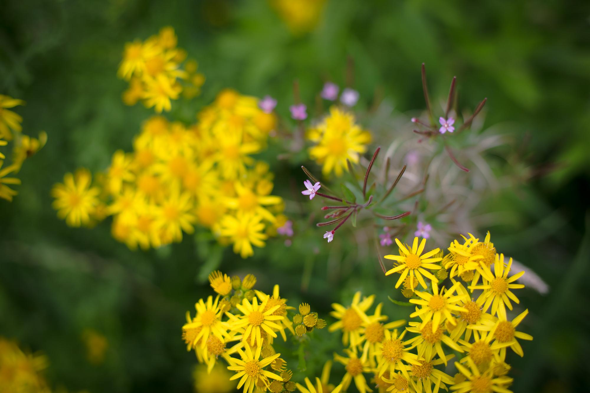 gardenblog-11.jpg