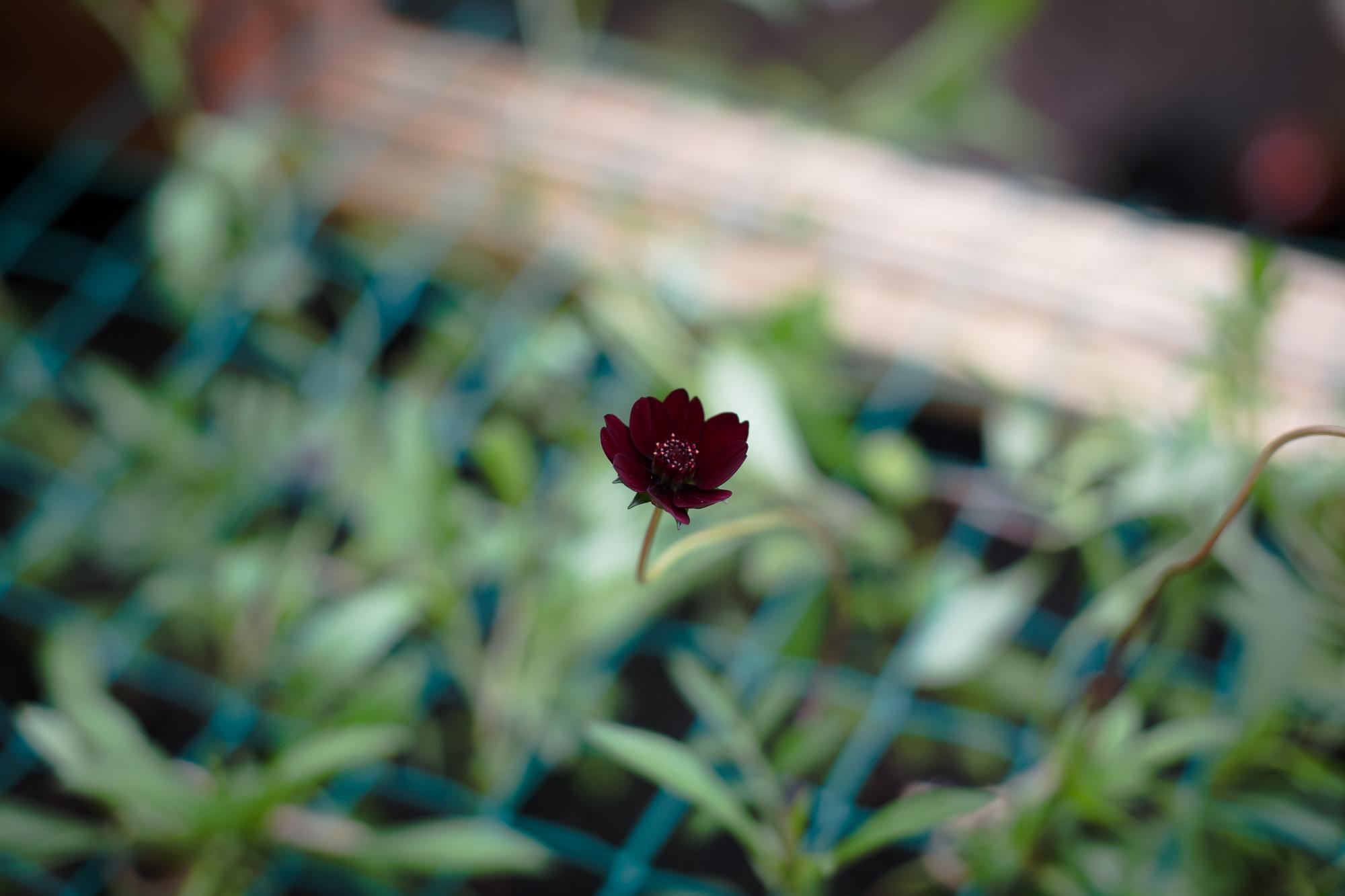 gardenblog-16.jpg