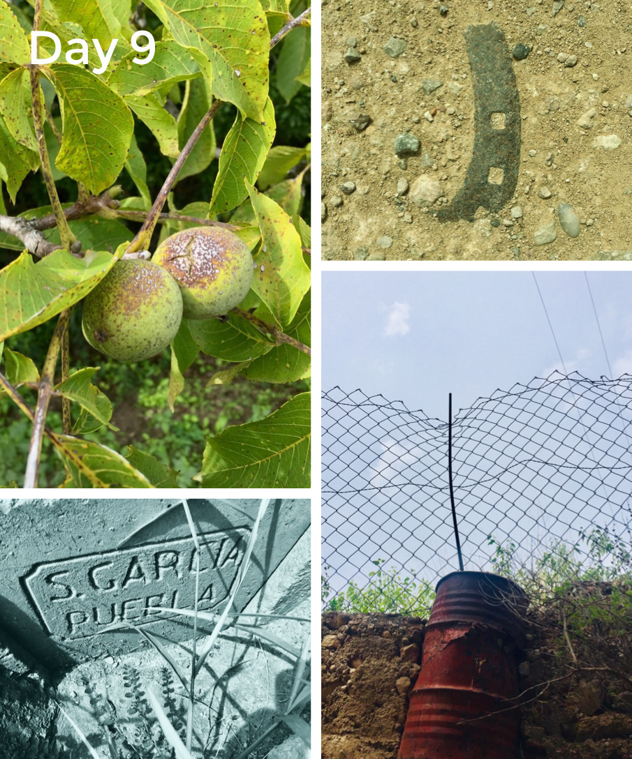 The walnuts are almost ripe, a horse shoe embedded in the concrete track, sluice gates seem to be dedicated to S. Garcia and an interesting fence post.
