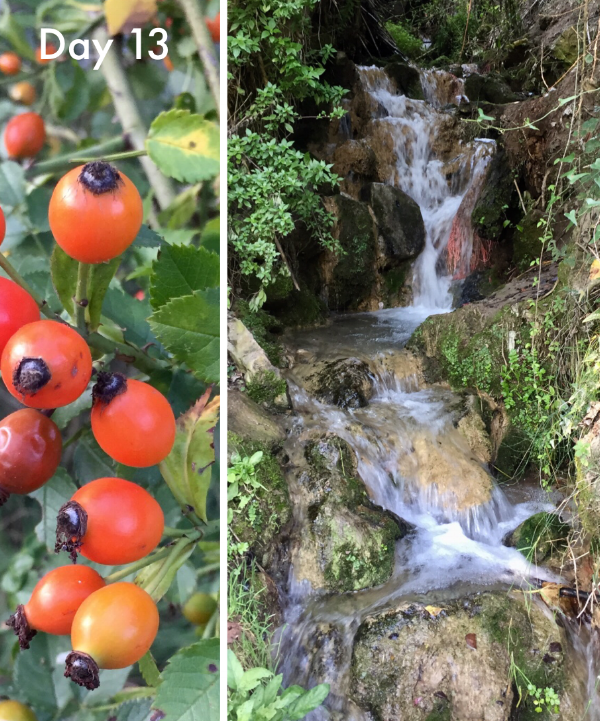 Rose hips and a small waterfall