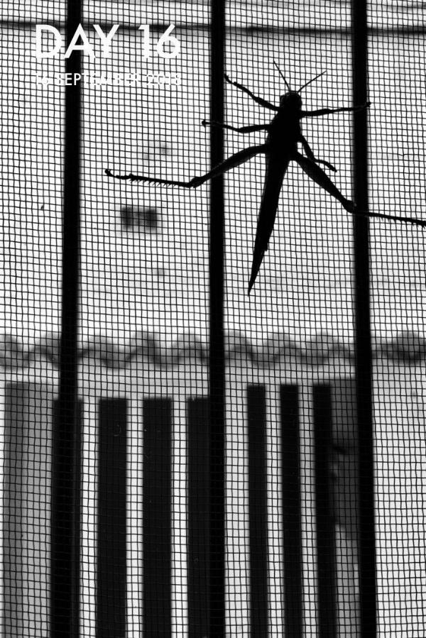 A locust on the window screen.