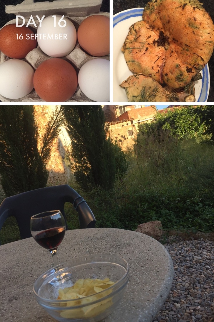 Fresh eggs, rovanalles? fungi and a nice glass of wine in the garden.