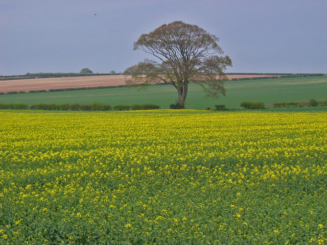 North of Kilham, copyright Stephen Horncastle