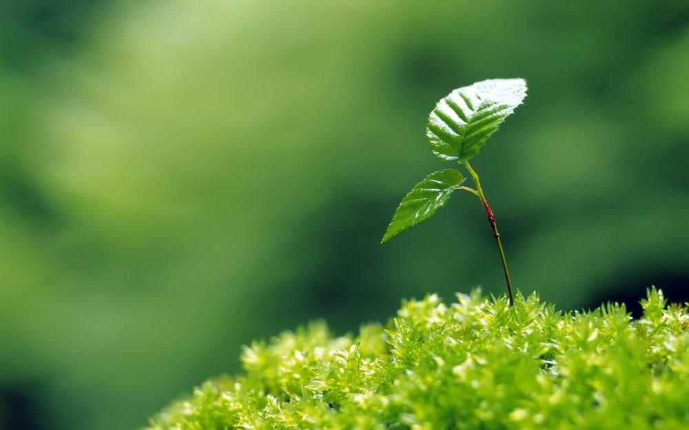 Plant Biology -