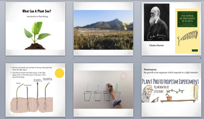 Storyboard for Section 1: What can a plant see?
