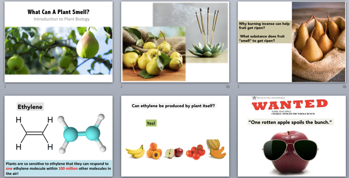 Storyboard for Section 2: What can a plant smell?