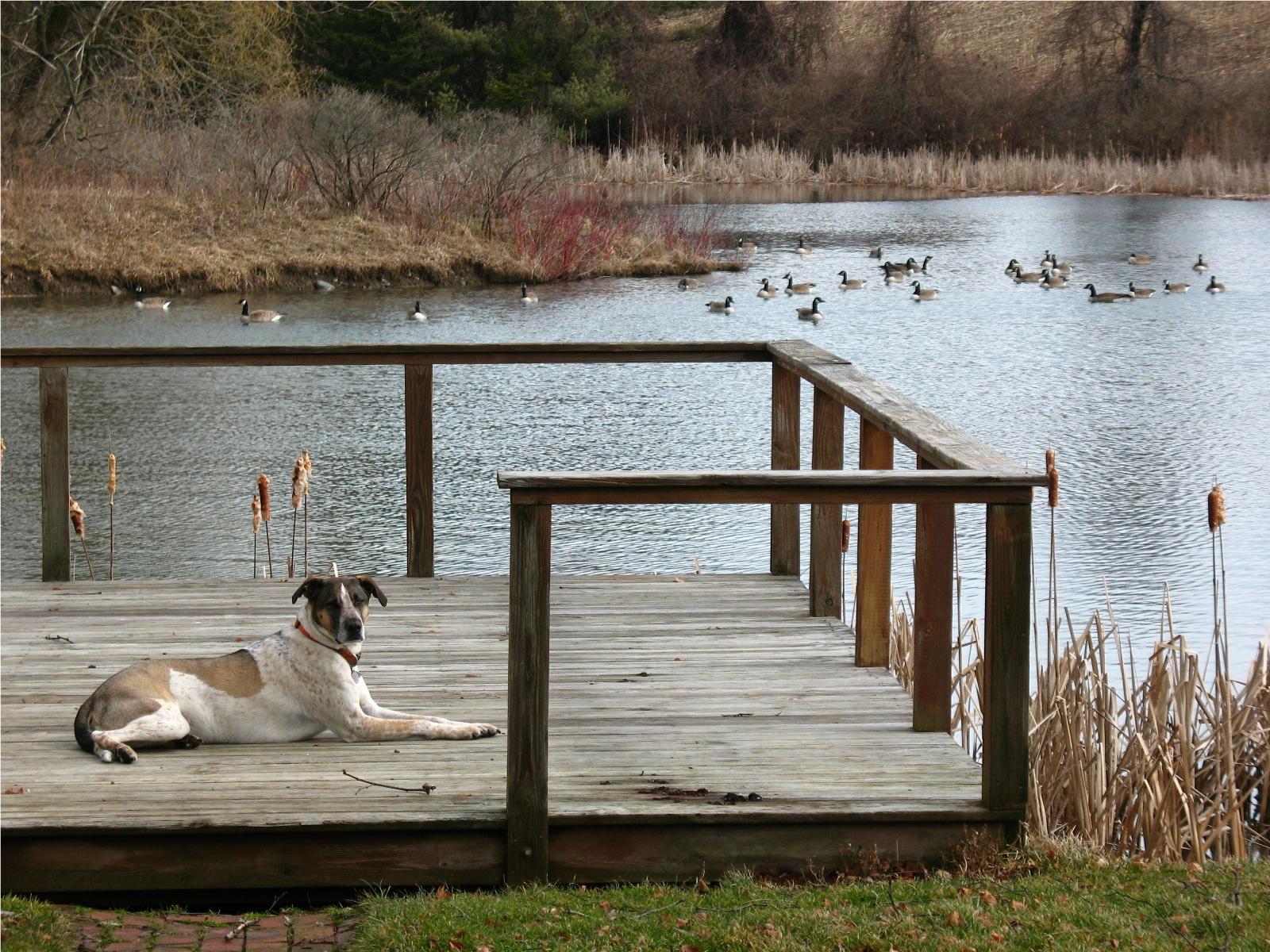 Arlo-Geese.jpg