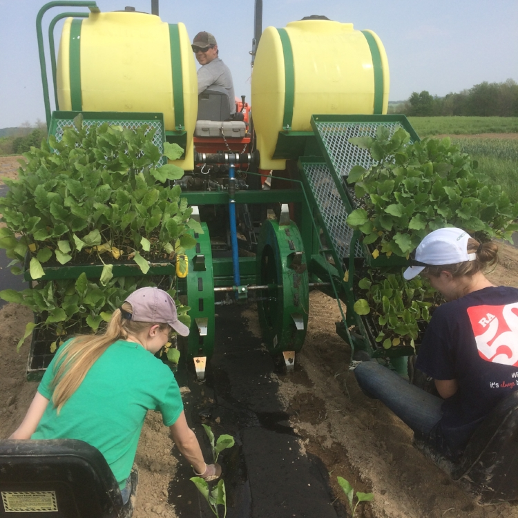 Transplanting eggplant in late May on our (new to us) Waterwheel transplanter... fun!