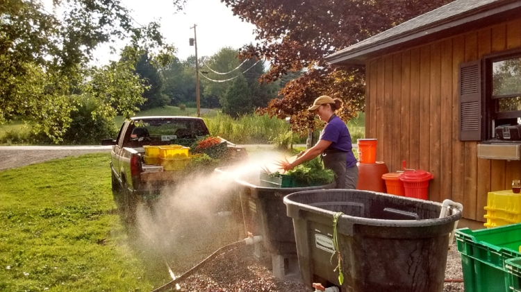 Late summer root washing... who's that making such a mess?