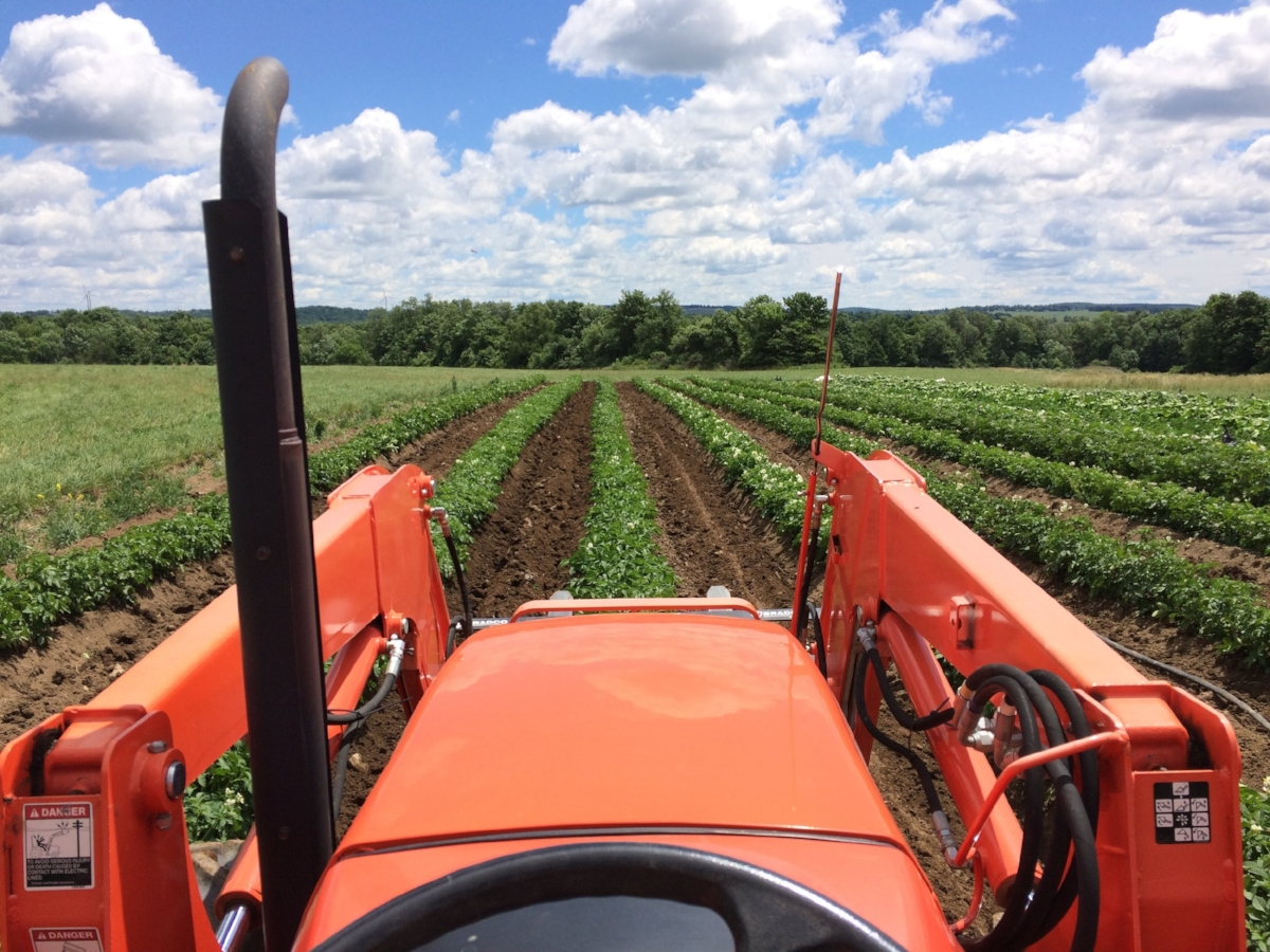 The view from our desk (over last year's potato field)!