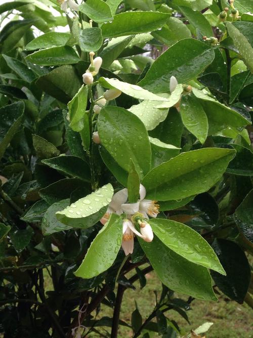 Spyke S Tropical Nursery 95 Varieties