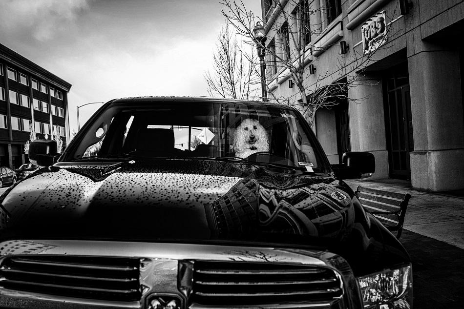 Poodle Truck
