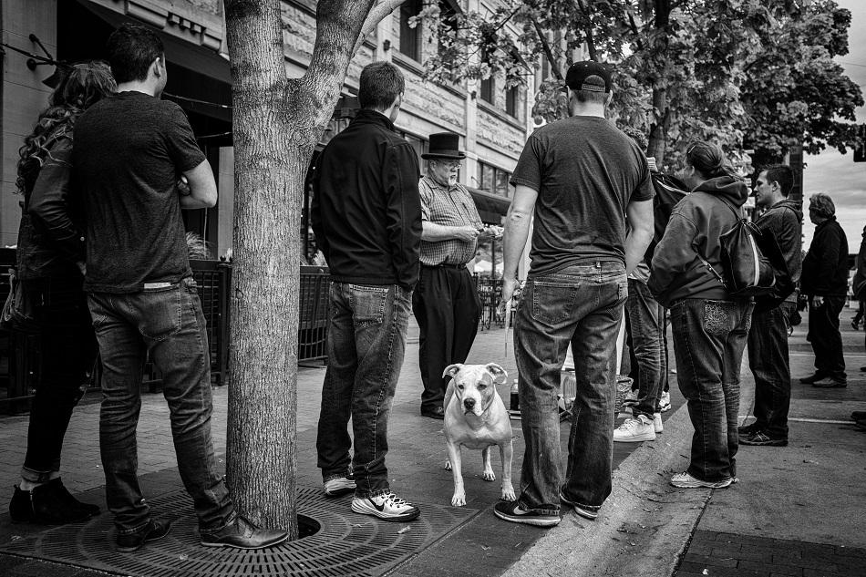 Dog ignoring magic.jpg