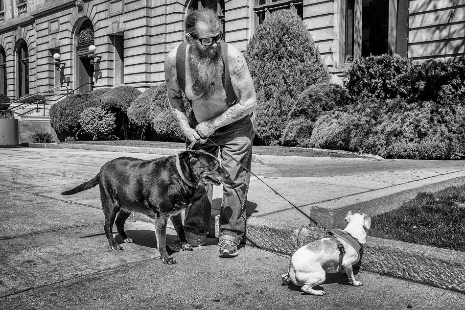 Man with dogs.jpg